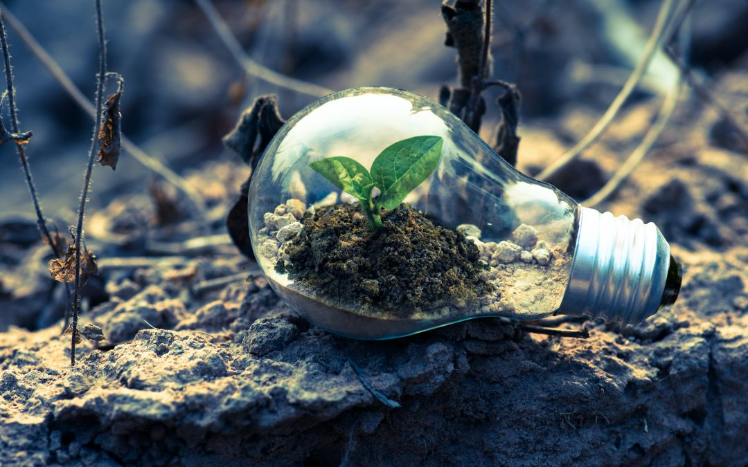 Future Skills Digest For The New Green Economy